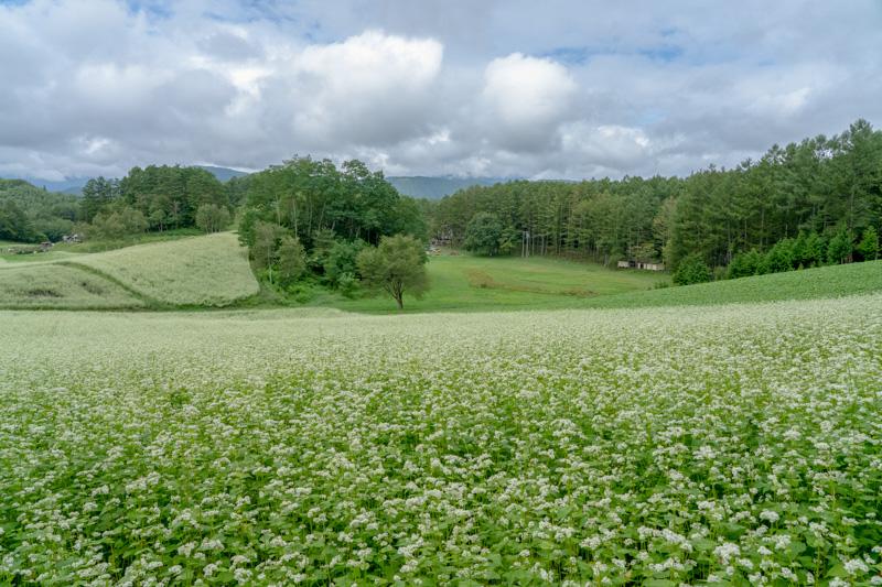 一面そばの花の中山高原